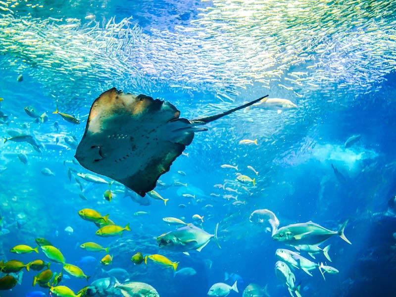 My Maldives Holiday Things To Do